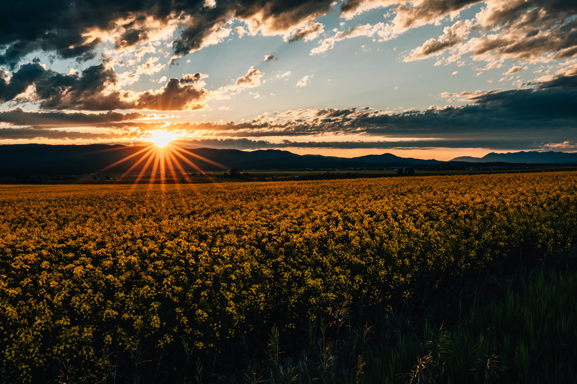 Kalispell Canola Field Sunset-27